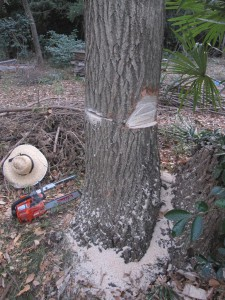 2013-12-17 Tree1