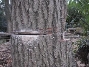 2013-12-17 Tree2