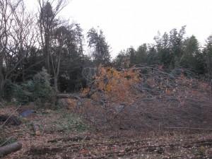 2013-12-17 Tree5