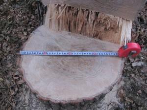 TreeCut