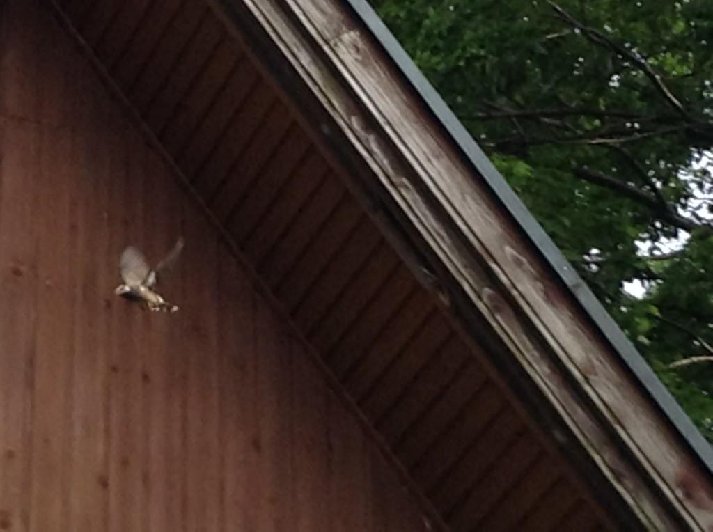巣から飛び立つ親鳥